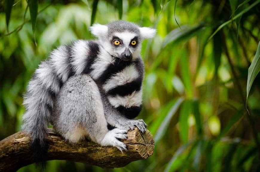 MADAGASKAR – mora mora … cd